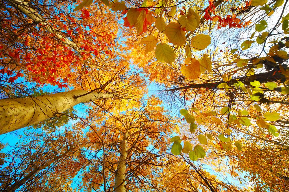 autunno9