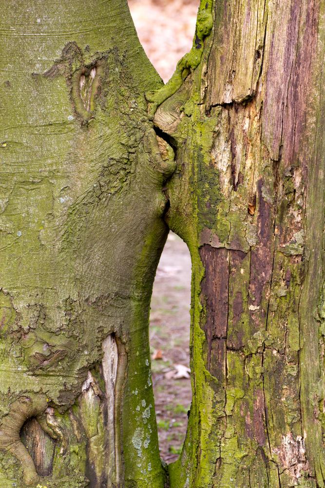 bali albero