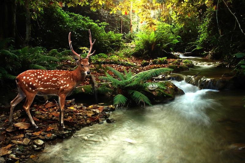 bambi foresta