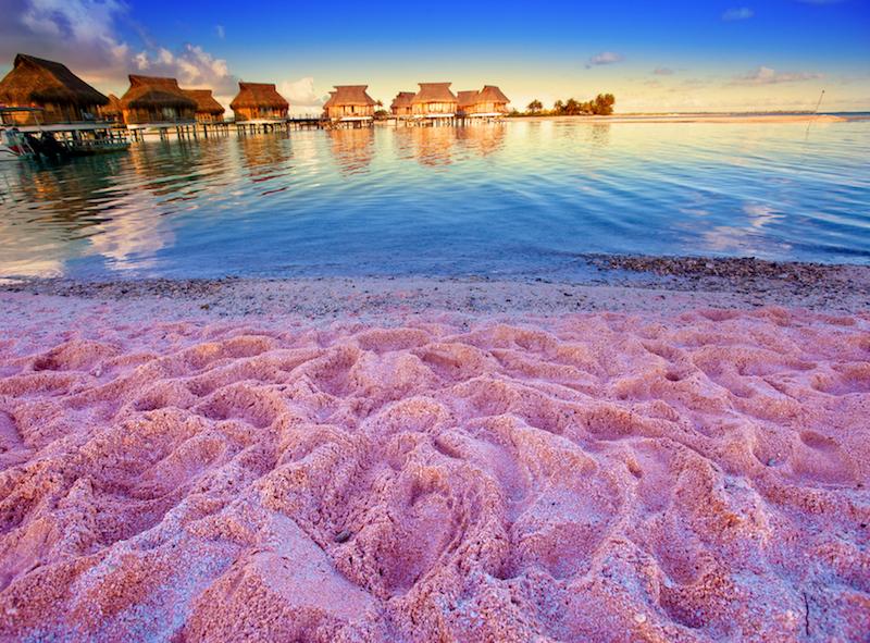 bermuda spaiggai rosa