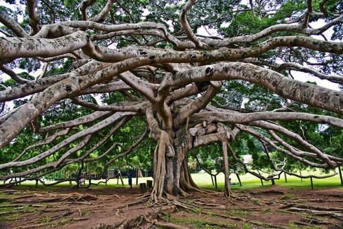 botanical Garden of Peradeniya KandyRoyal Botanical Gardens asias most beautiful botanical Garden