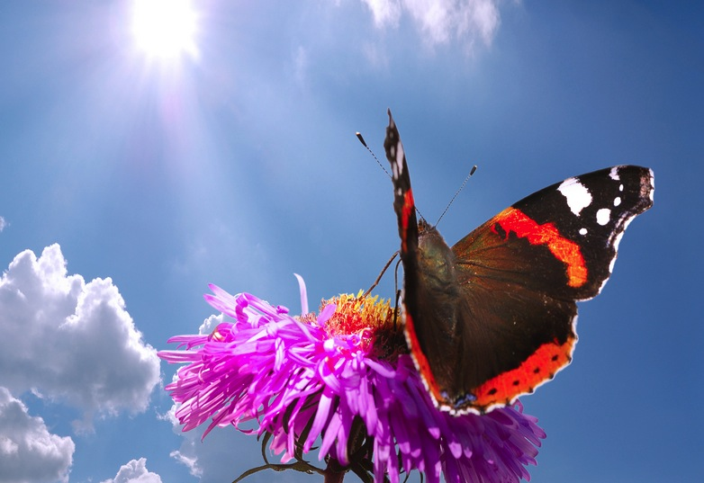 butterfly and flower1