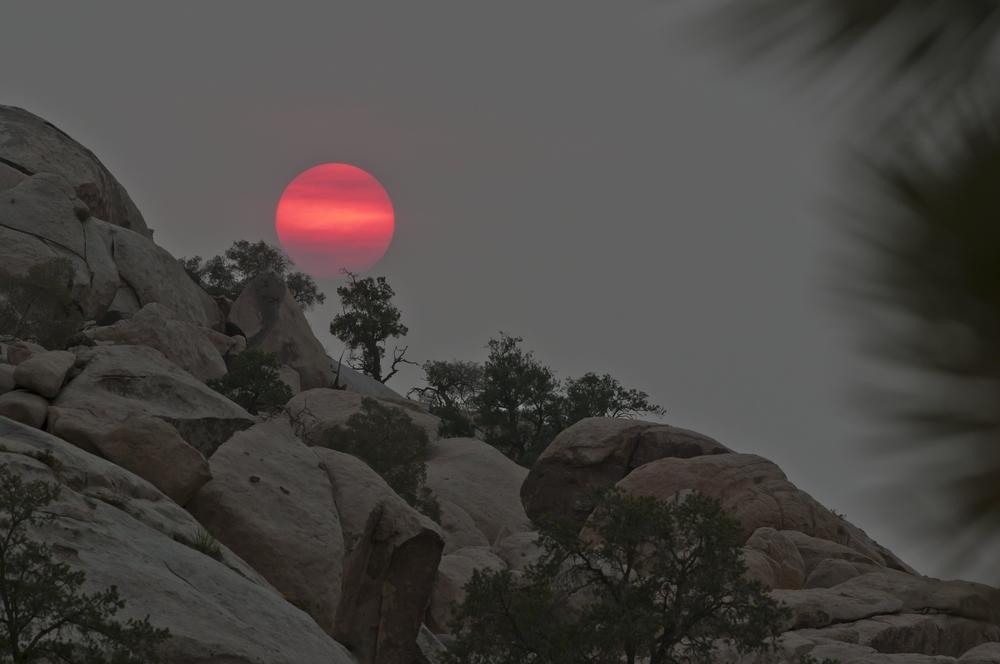 california rossa