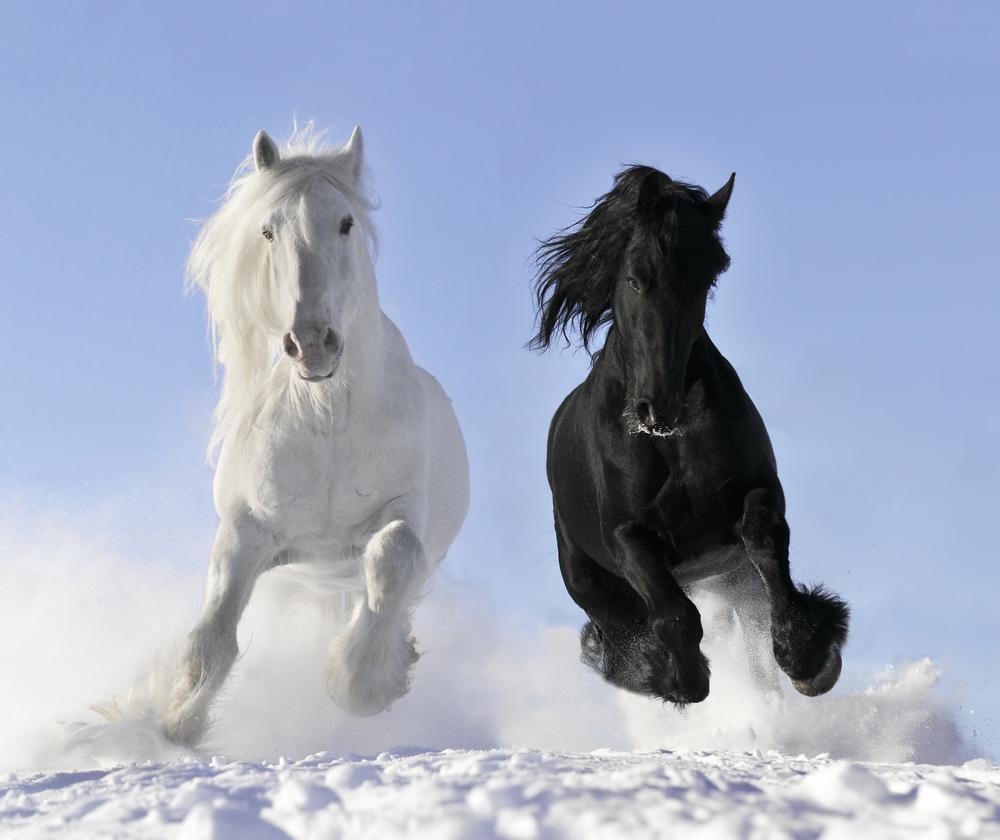 cavalli bianco 90e nero