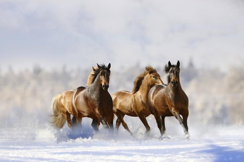 cavalli corrono