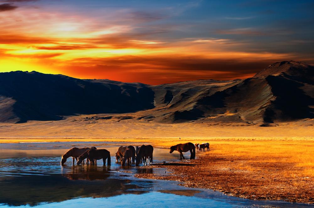 cavalli tramonto