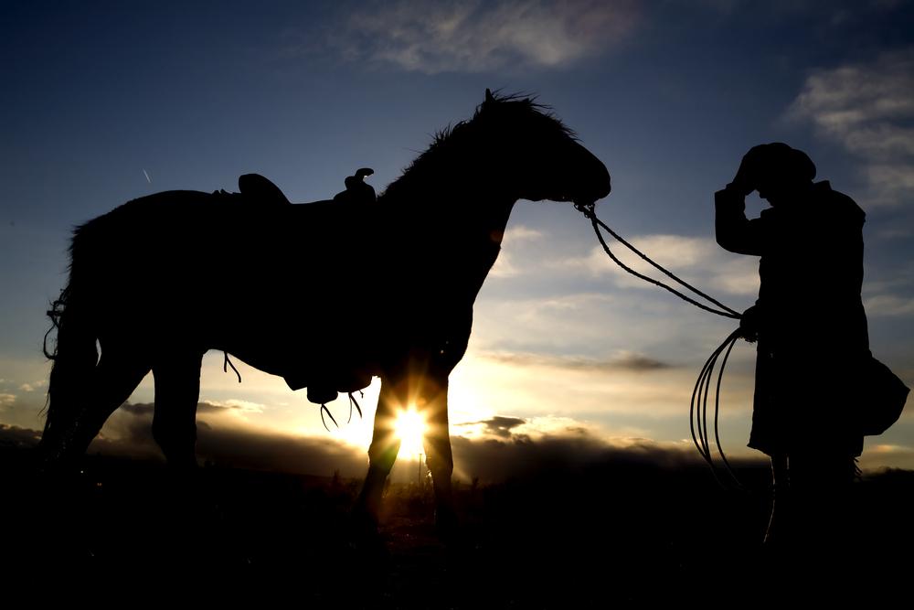 cavalli uomo