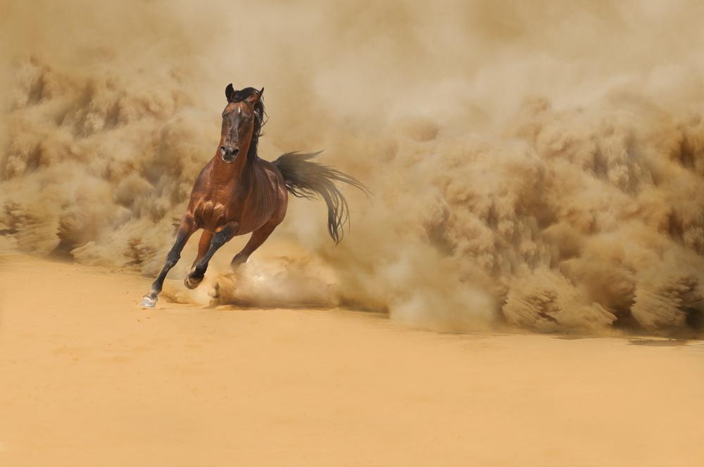 cavallo selvaggio deserto