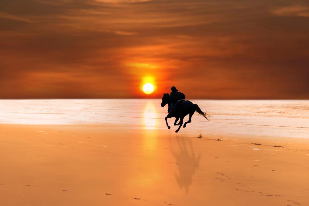 cavallo spiaggia