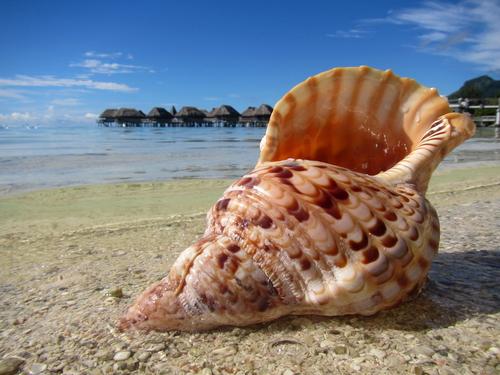 conchiglia spiaggia caledonia