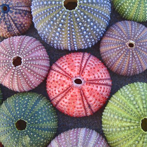 conchiglie ricci colorate
