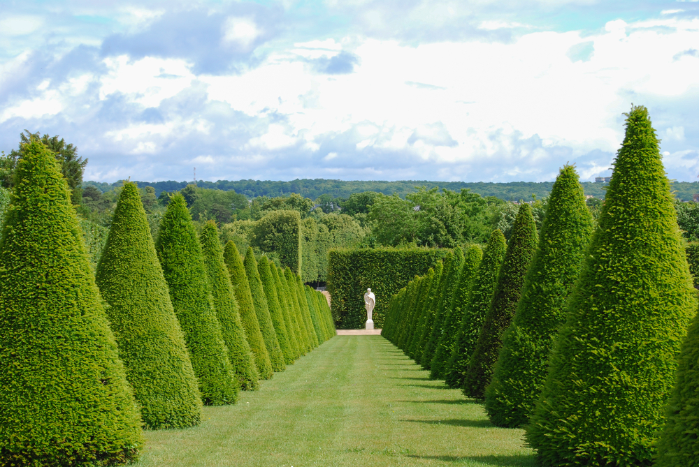 conical hedges lines and lawn Versailles Chateau France