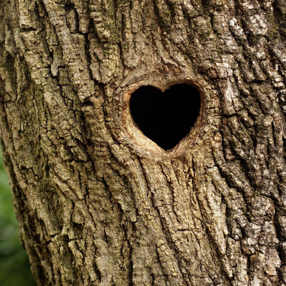cuore albero