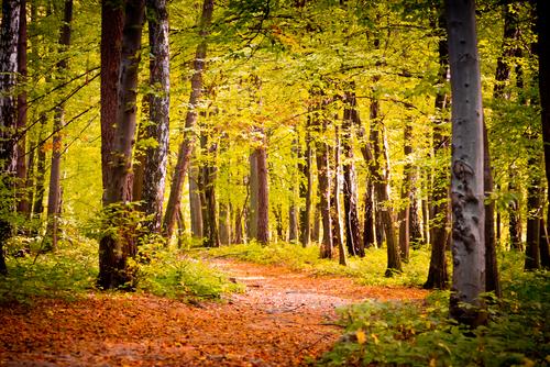 dark forest near Rzeszow Poland 64