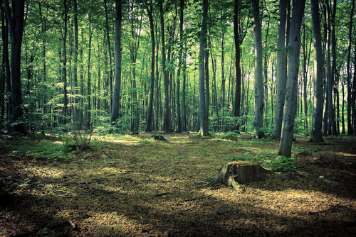 dark forest near Rzeszow Poland 7