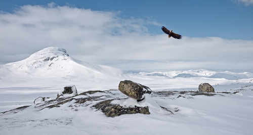 eagle with scenery