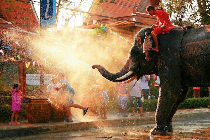 elefante doccia