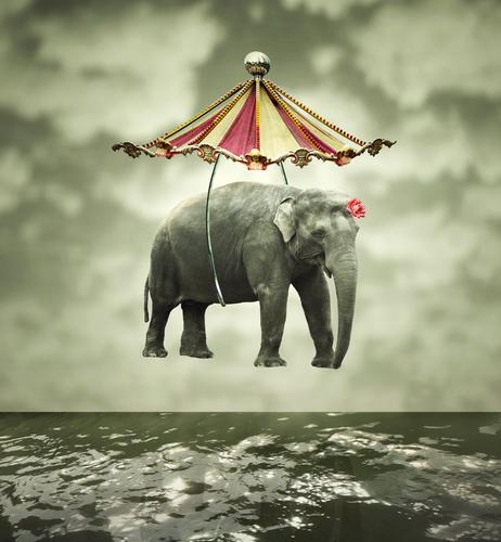 elefante filo