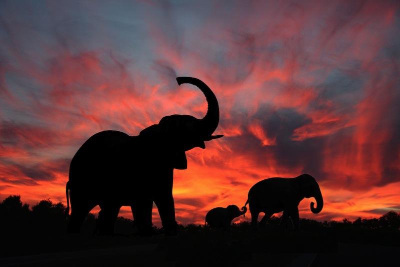 elefanti tramonto