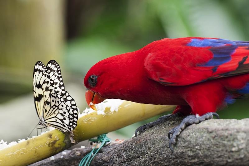 farfalla e pappagallo