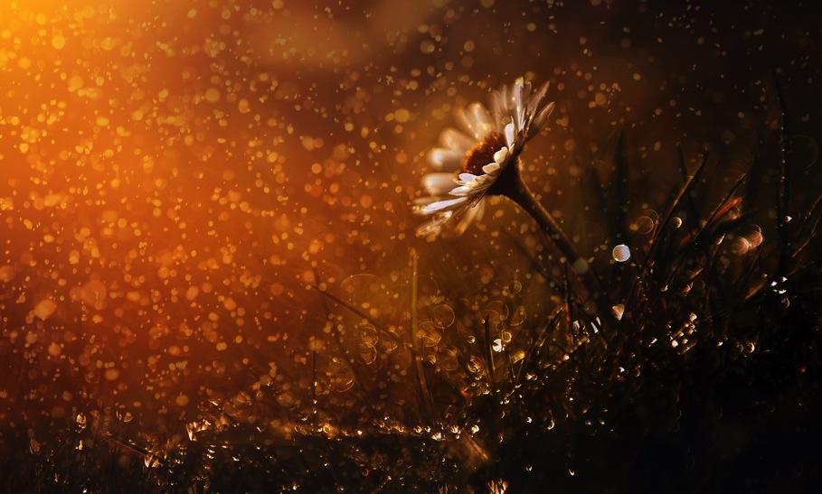 fiore autunno pioggia3