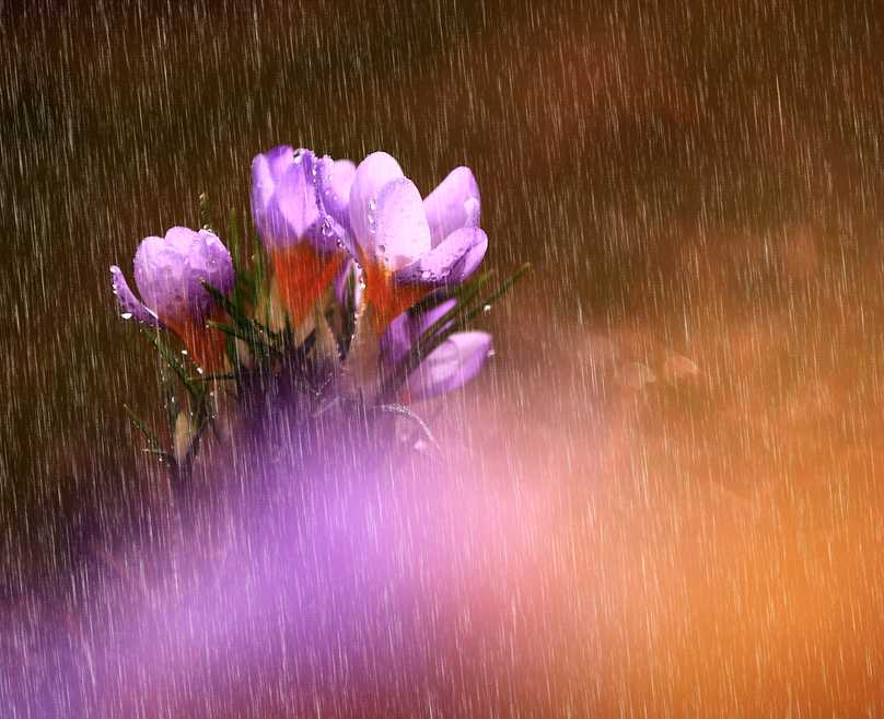 fiore buondi