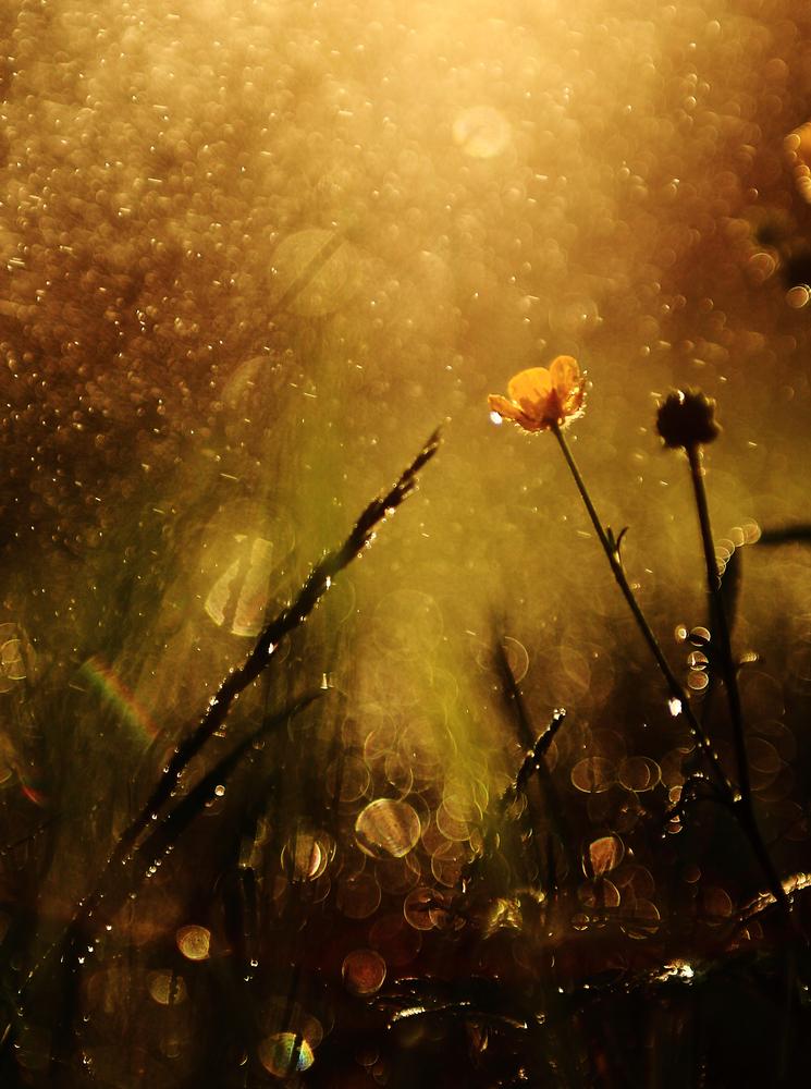fiore pioggia 2