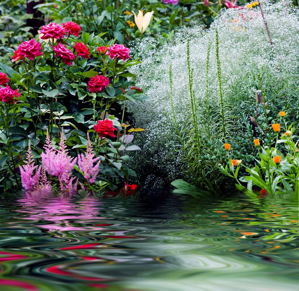 fiori fiume