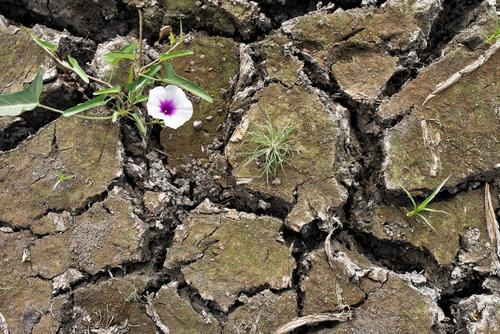 fiori mongolia
