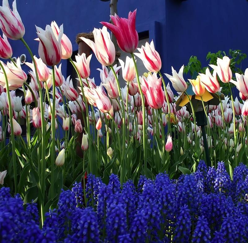 flowers at tivoli