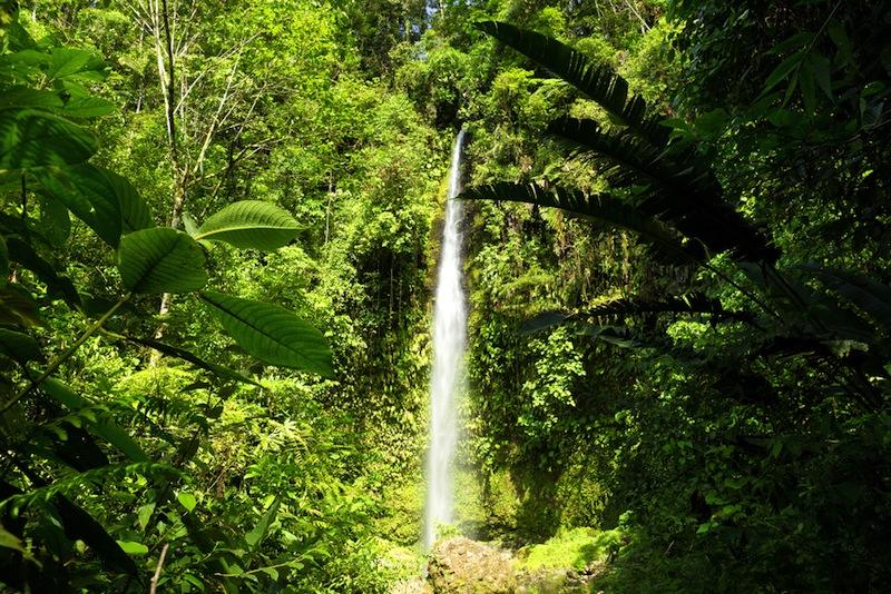 foresta Equador