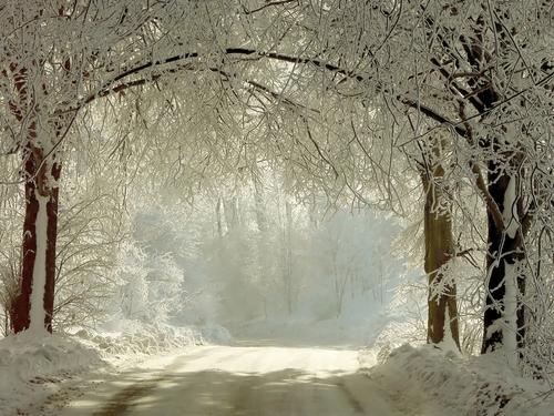 foresta biancaù