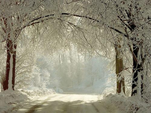 foresta bianca2