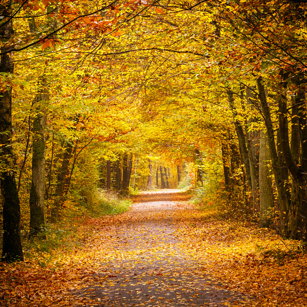 foresta germania