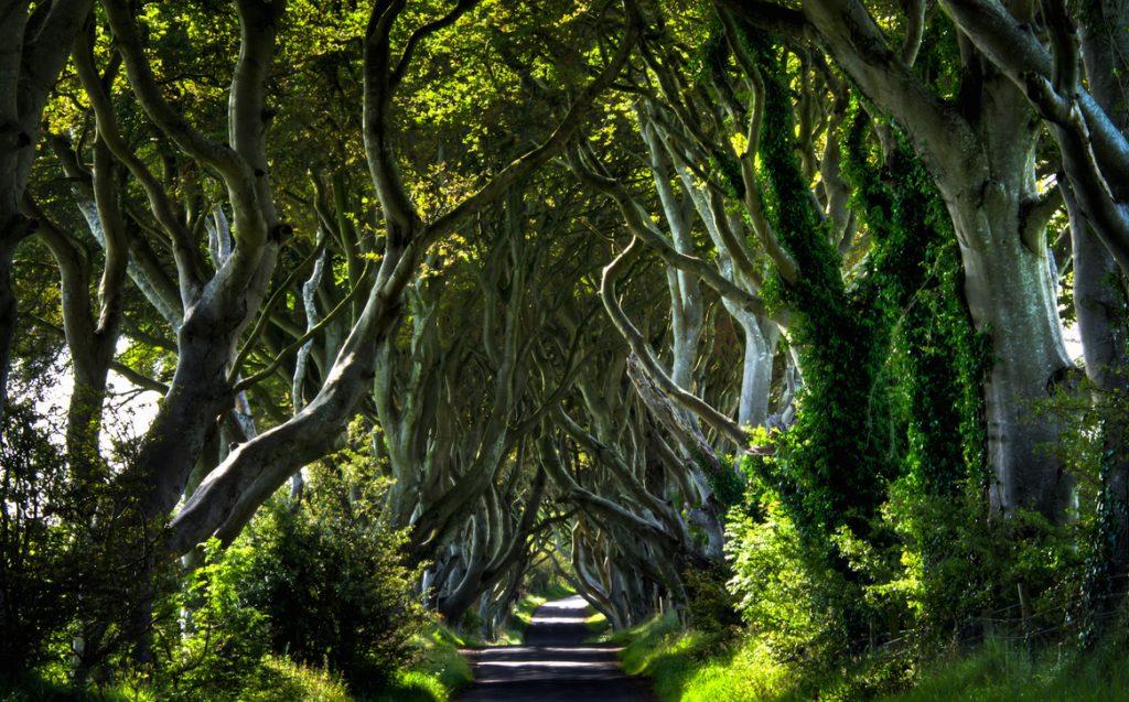 foresta irlanda2