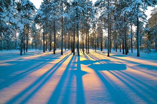 foresta kamciavca