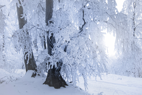 foresta nera neve
