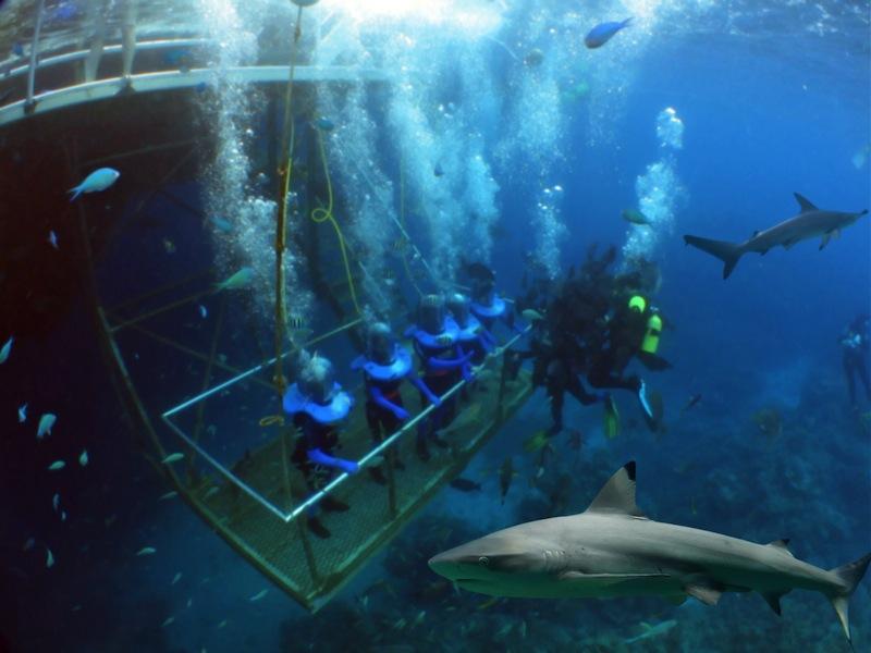gabbia squali