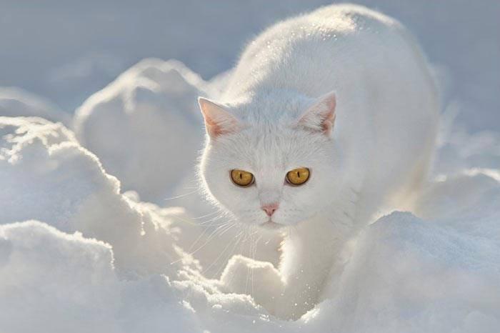 gatoo neve