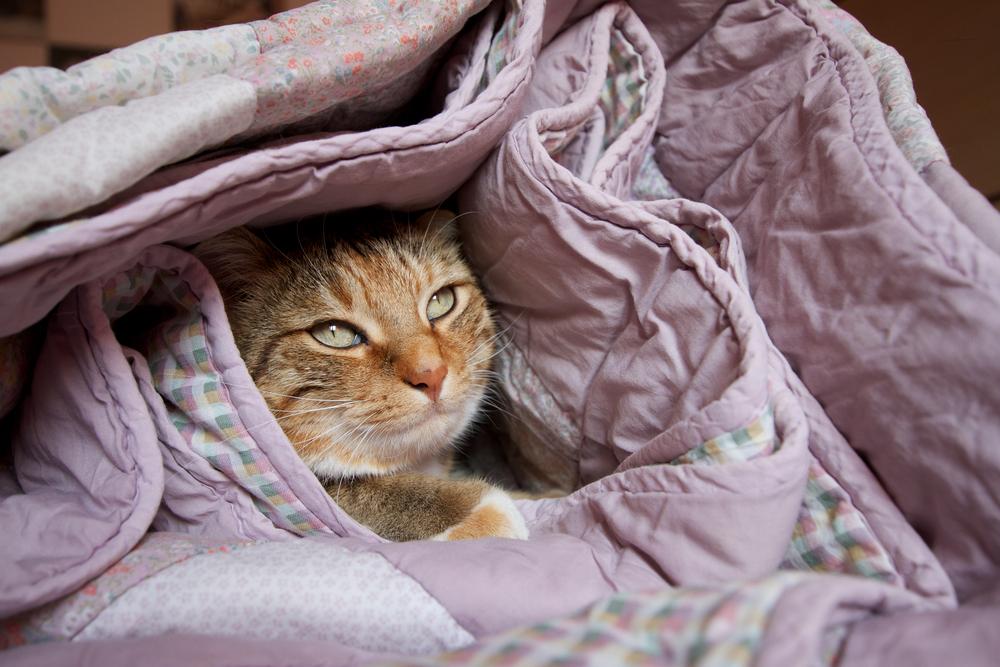 gatto coperte