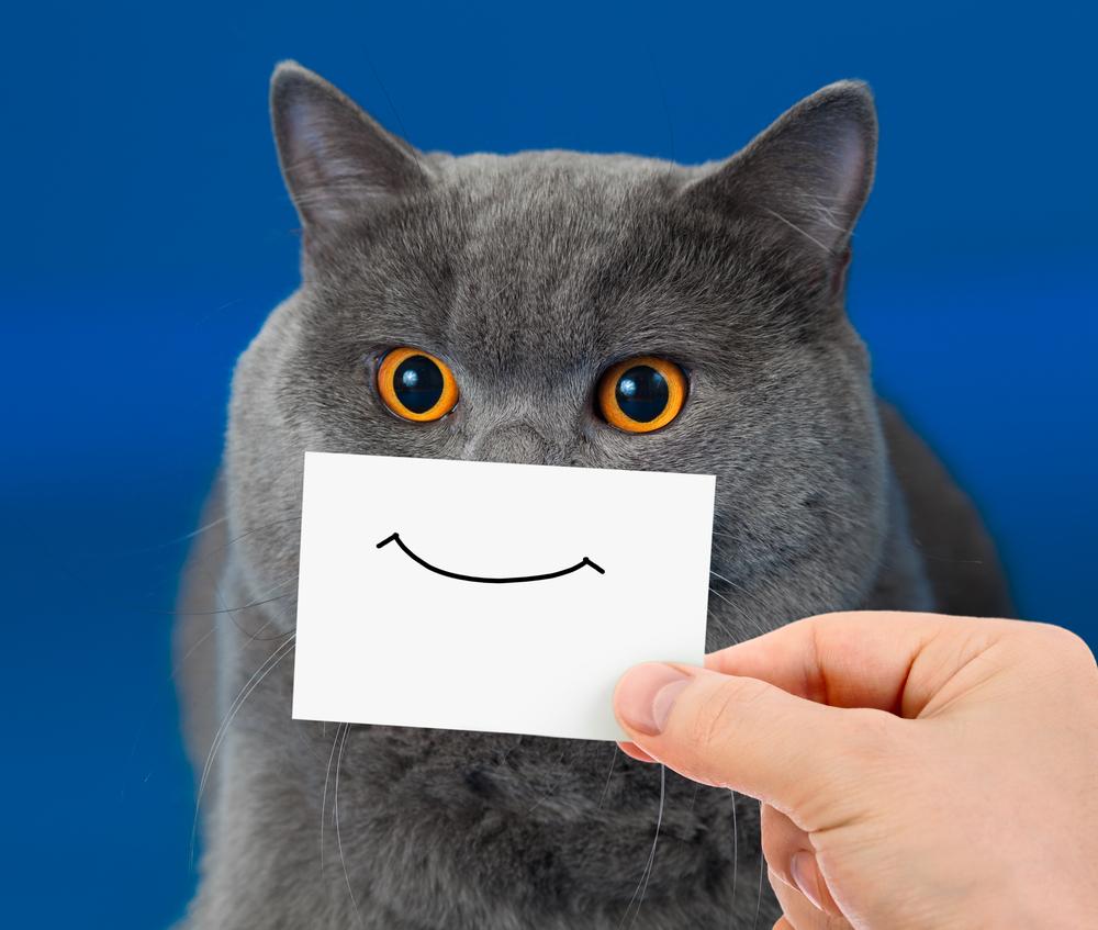 gatto sorriso