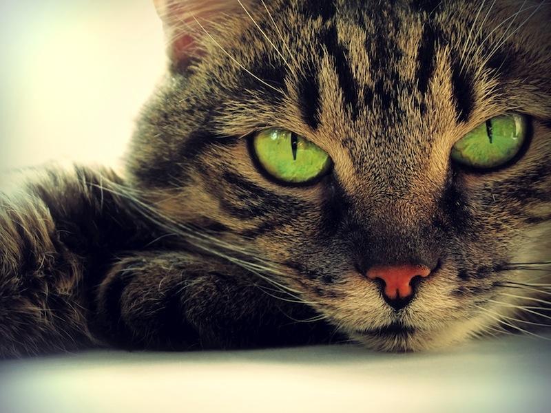 gattooo