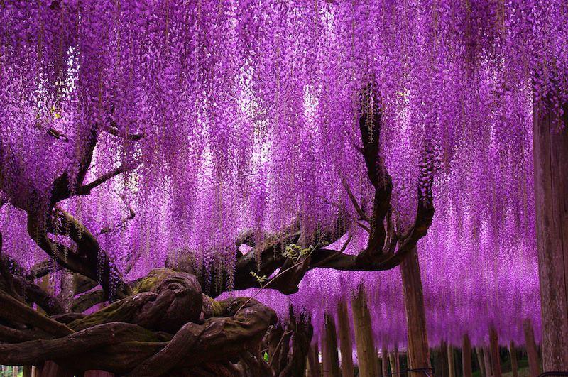 giardini kioto giappone
