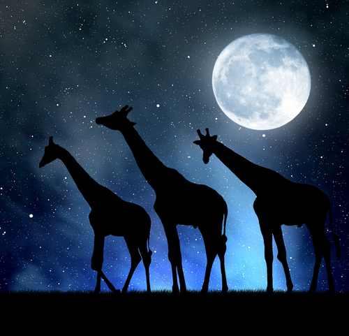 giraffe luna