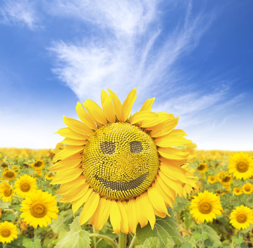 girasole sorriso9
