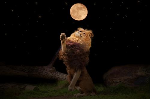 leone luna