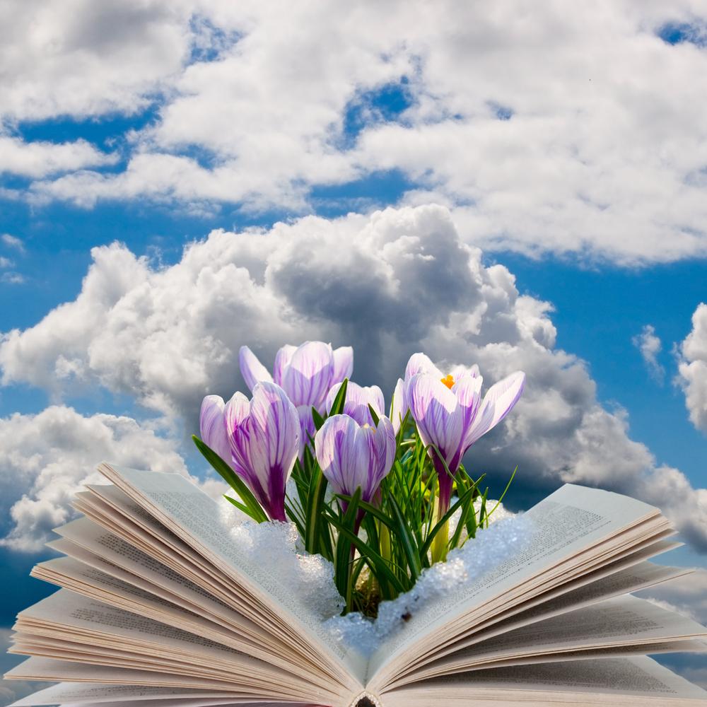 libro fiori