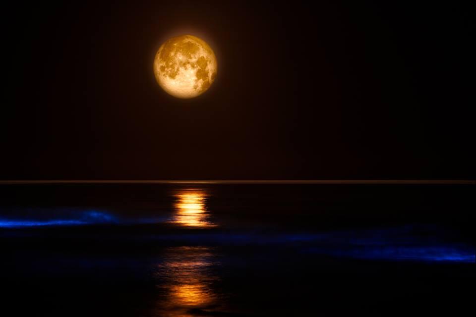 luna blu scia