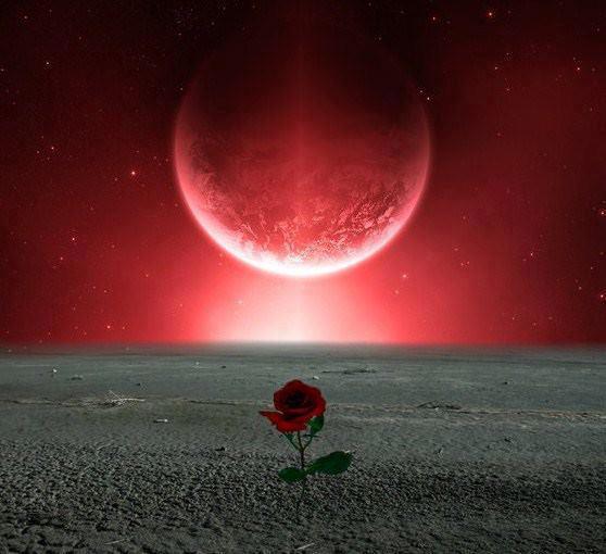 luna e rosa_n