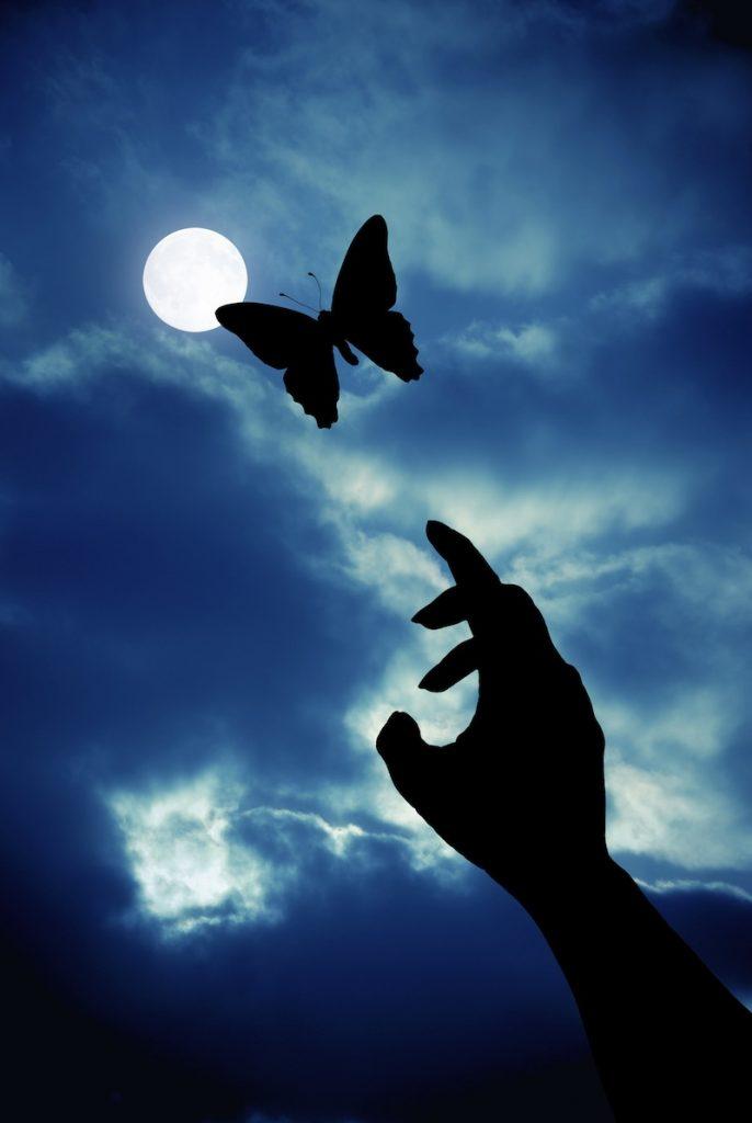 luna farfalla